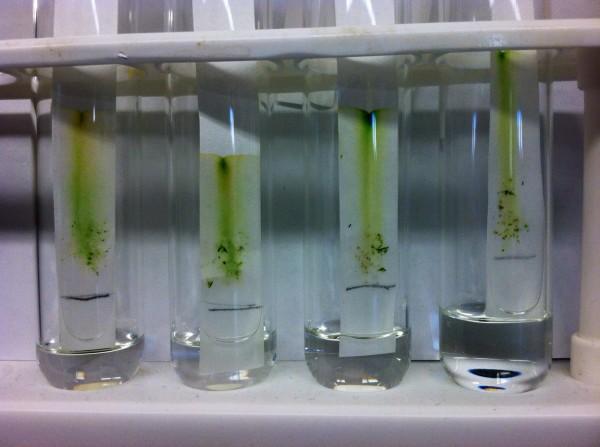 testtube_plants