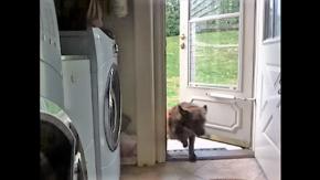 automatic pet door